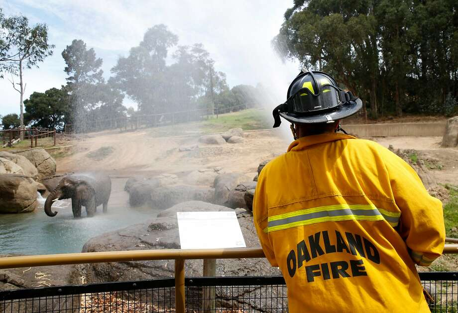 Oakland firefighter William Sweeting from Station 28 sprays water on the African elephants to keep them cool during the current heat wave at the Oakland Zoo in Oakland, Calif. on Thursday, Aug. 3, 2017. It's the first time the zoo called on the fire department to hose down the pachyderms. Photo: Paul Chinn, The Chronicle