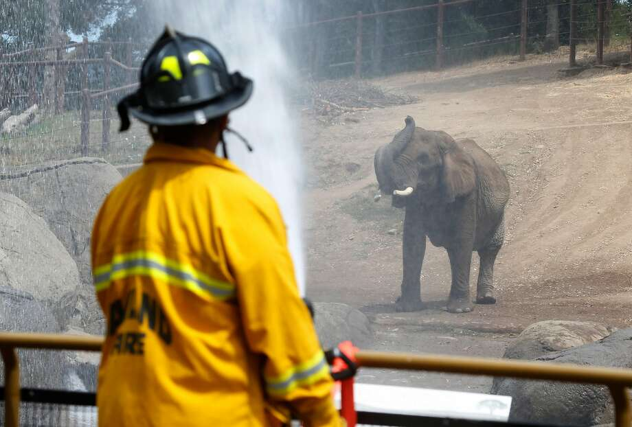 Lisa the African elephant enjoys a soaking from Oakland firefighters who sprayed water from their hoses to keep them cool during the current heat wave at the Oakland Zoo in Oakland, Calif. on Thursday, Aug. 3, 2017. It's the first time the zoo called on the fire department to hose down the pachyderms. Photo: Paul Chinn, The Chronicle