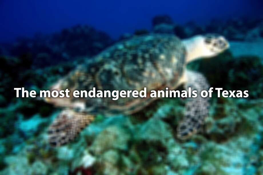 The most endangered animals of Texas