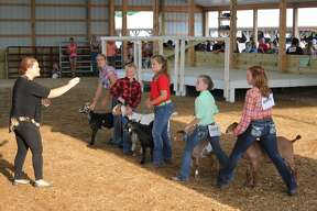 Thursday's action at the Huron Community Fair included the beef show and the goat show.