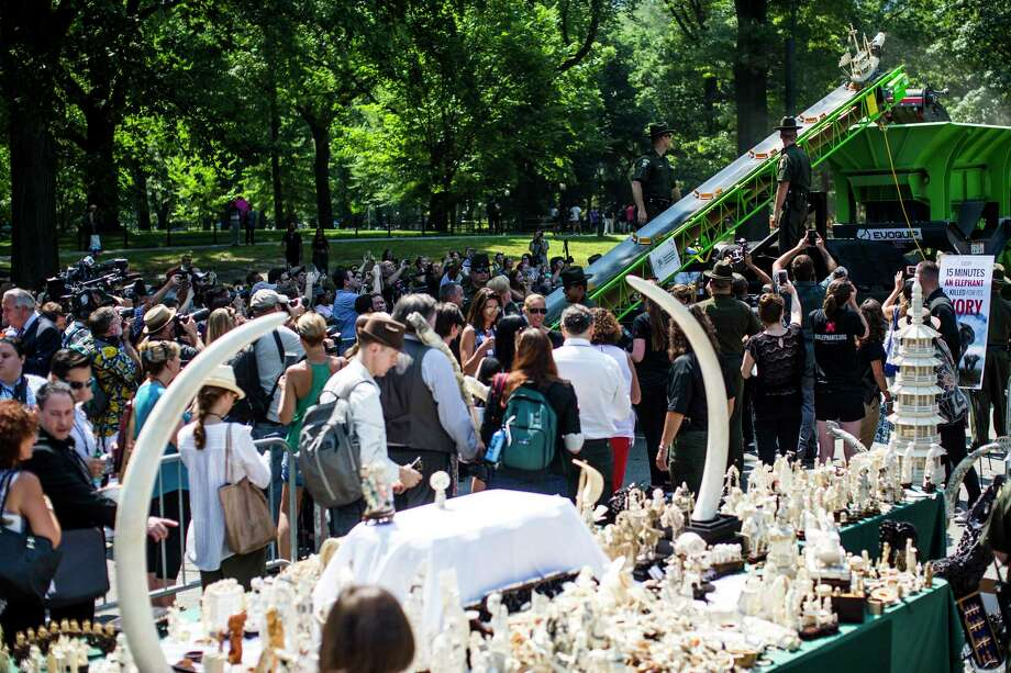 "Statues and jewelry made from elephant ivory on their way to a pulverizer at the ""Ivory Crush"" event in Central Park in New York, Aug. 3, 2017. Nearly two tons of ivory worth about $8 million were destroyed at the event, part of a campaign to raise awareness about elephant poaching. (Justin Gilliland/The New York Times)  ORG XMIT: XNYT134 Photo: JUSTIN GILLILAND / NYTNS"
