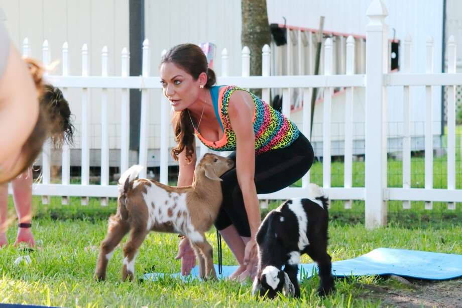 Goat Yoga class leader Rachel Henson is surrounded by goats as she leads a Goat Yoga session in League City Friday, Aug. 4. Photo: Kirk Sides/Houston Chronicle