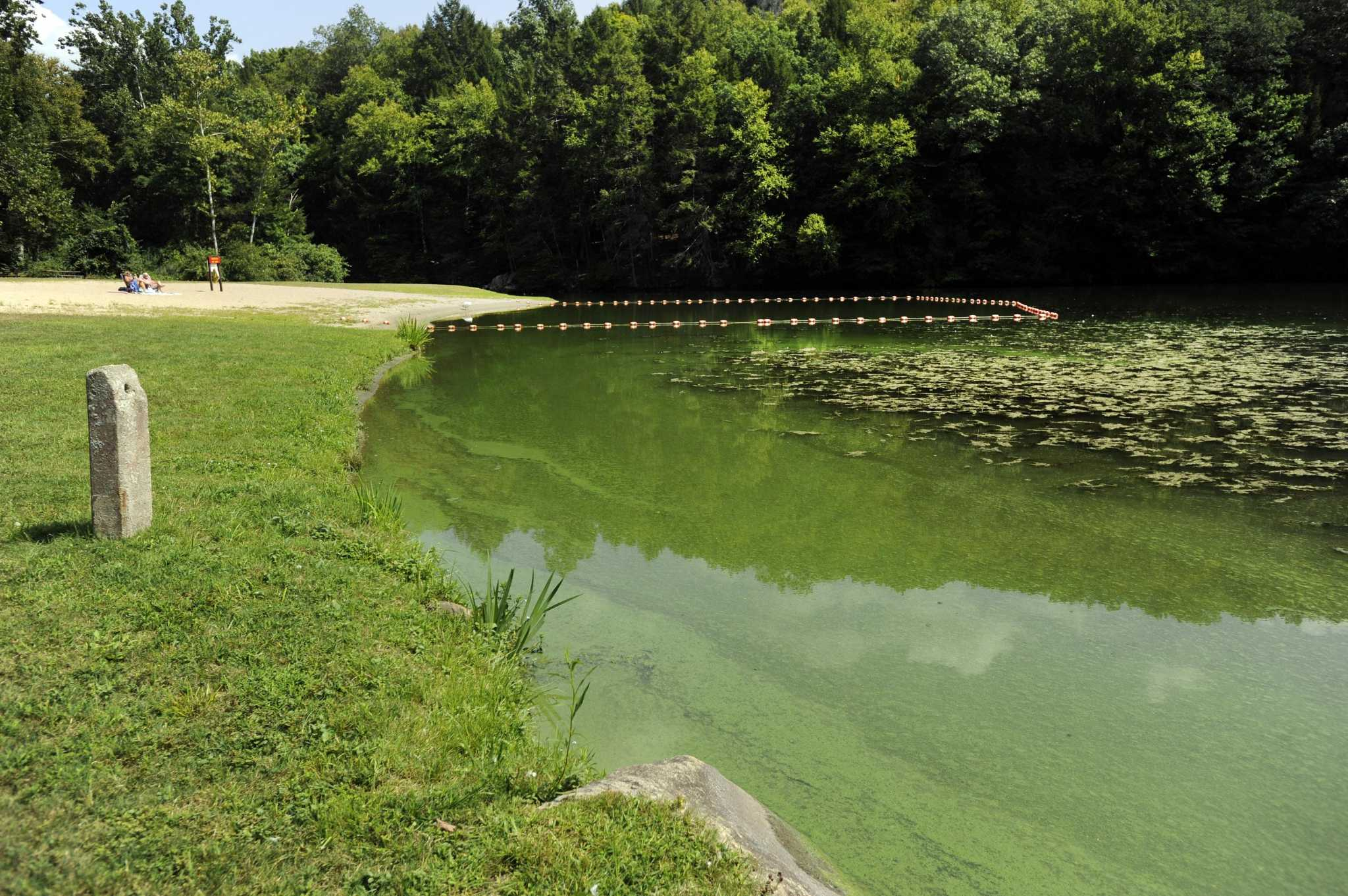Swimmers Cautioned About Blue-green Algae Blooms
