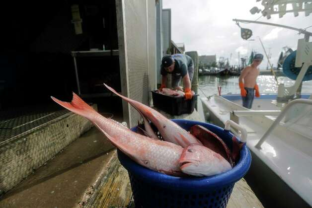 Fishing with Buddy Guindon, owner of Katie's Seafood, and sons in Galveston Bay on Wednesday, May 31, 2017, in Galveston. Photo: Elizabeth Conley, Houston Chronicle / © 2017 Houston Chronicle