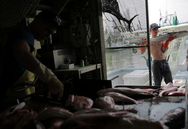 Buddy Guindon's son brings fish into Katie's Seafood, and sons in Galveston Bay on Wednesday, May 31, 2017, in Galveston. Photo: Elizabeth Conley, Houston Chronicle / © 2017 Houston Chronicle