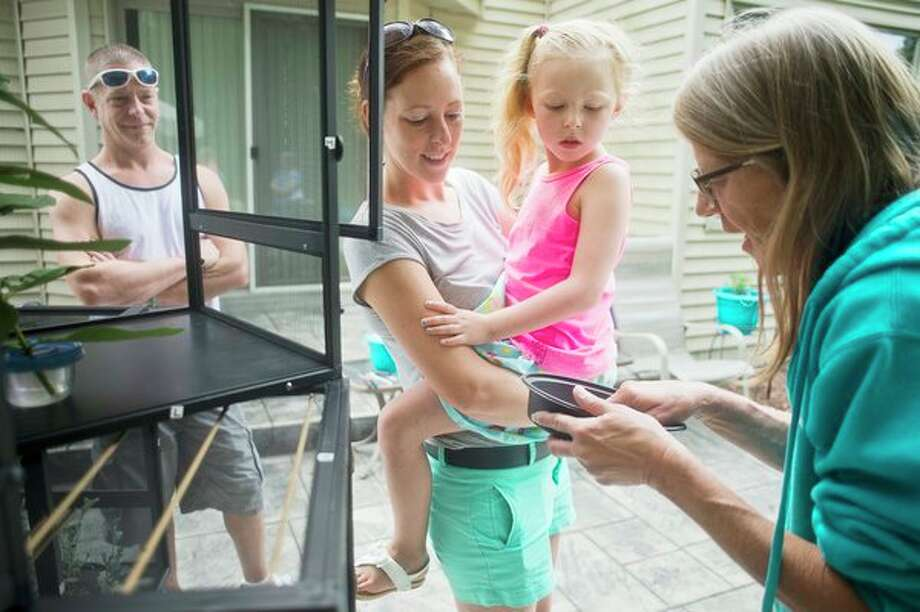 (ABOVE) Audrey Diadiun, right, shows caterpillar eggs to, from left, Bill Spitz, Christina Spitz and Kaylee Spitz, 5, who are neighbors of Diadiun's, in Diadiun's backyard butterfly garden on Friday, July 14, 2017 in Midland. Audrey Diadiun holds a swallowtail butterfly on her hand in her backyard butterfly garden on Friday, July 14, 2017 in Midland. (Katy Kildee/kkildee@mdn.net)