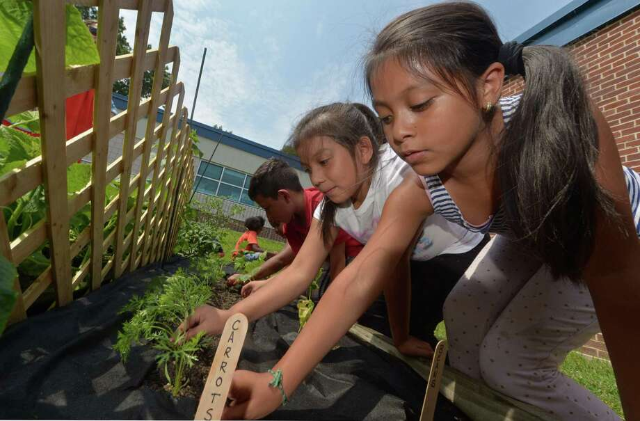 Students with the Norwalk Summer Academy at Brookside Elementary School including 7-year-old Michelle Ochoa, right, tend to their garden, which is part of a science component of the program, Wednesday, Aug. 2, in Norwalk. The students plant a garden from seed and visit the garden weekly as part of this project. Photo: Erik Trautmann / Hearst Connecticut Media / Norwalk Hour