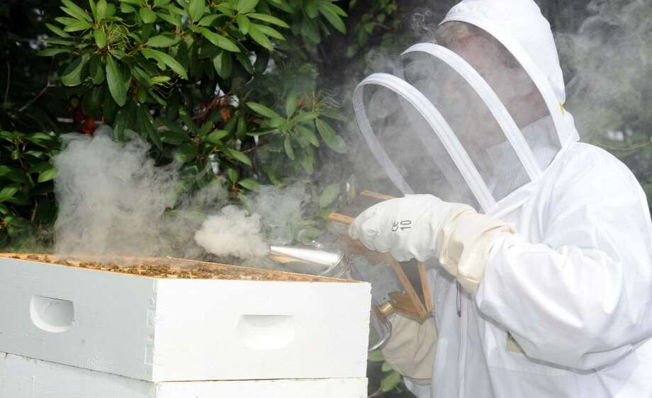 Lee Reelick smokes out bees as apart of the process of harvesting honey at Hollandia Nurseries in Bethel, Wednesday, June 16, 2010. Photo: Carol Kaliff / The News-Times