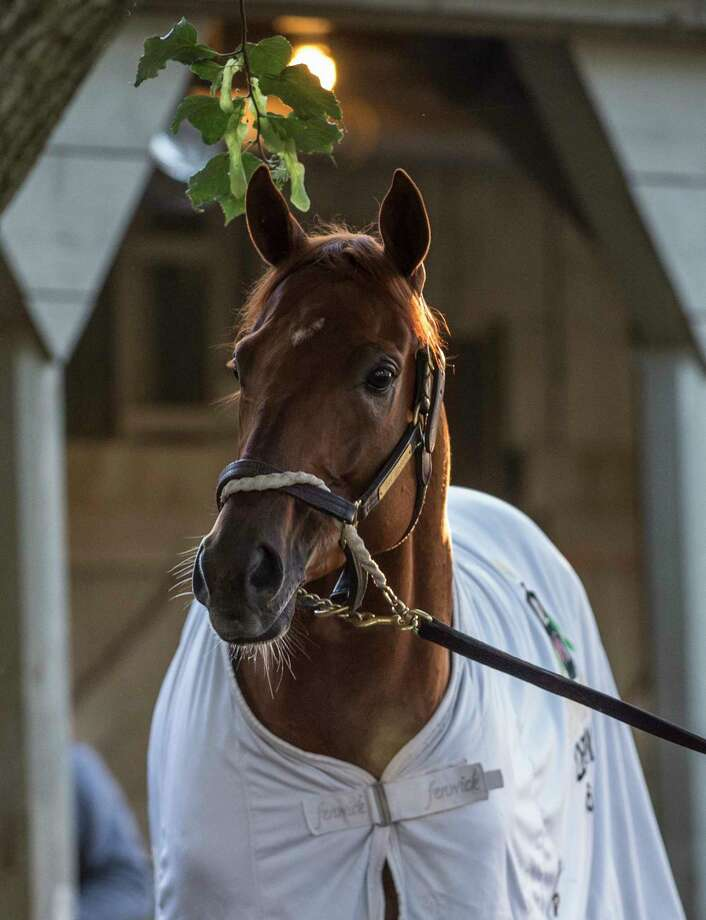Gun Runner, an expected entrant in the Whitney Stakes takes in the sights at the Oklahoma Training Center after  his final work in preparation for the Grade 1 Whitney Stakes Sunday July 30, 2017 at the Saratoga Race Course  in Saratoga Springs, N.Y. (Skip Dickstein/Times Union) Photo: SKIP DICKSTEIN