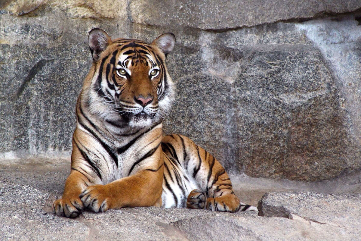 Tinder has asked users to stop posting photos of themselves posing with tigers.