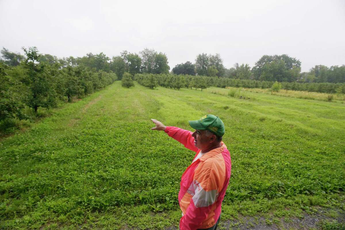 Jeremy Knight, owner of Knight Orchards, stands in an area of his orchard on Tuesday, July 25, 2017, in Ballston, N.Y. Knight, whose family has fought water extensions on Goode Street for more than a decade, points out an area where he believes development has shifted the water table. (Paul Buckowski / Times Union)
