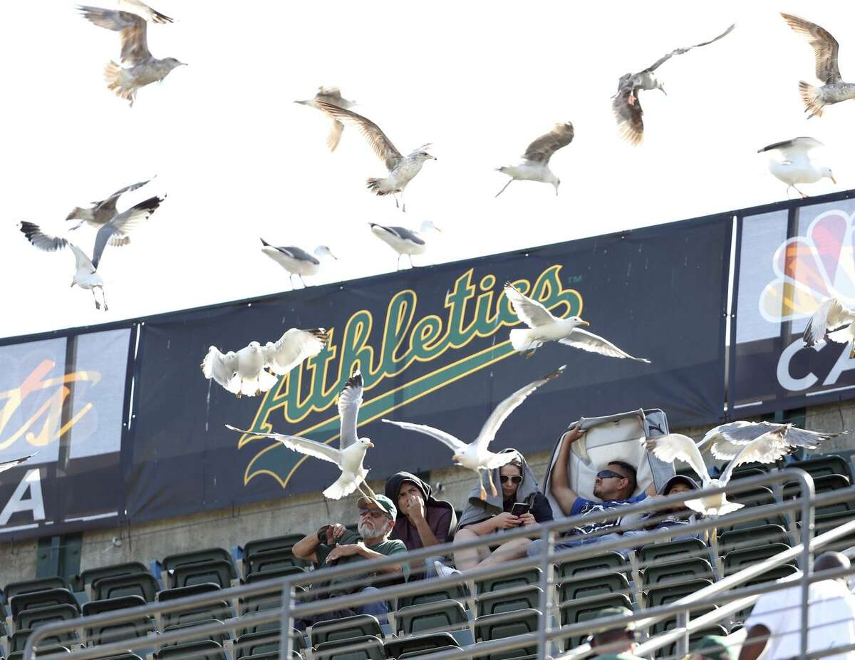 Oakland business and civic leaders rallied Monday to declare their support for the A's ballpark proposal, which they say will deliver thousands of jobs and rejuvenate a stagnant part of the city.