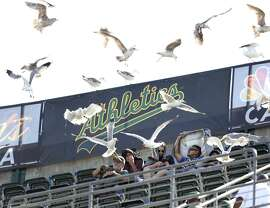 As the A's search for a location for a new ballpark in Oakland, fans have to hope that the team's future digs — unlike the Coliseum — aren't for the birds late in the game.