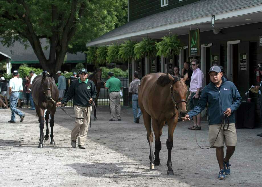 Business is very brisk as perspective buyers look over the sales yearlings on the Fasig-Tipton sales grounds Sunday Aug. 6, 2017 in Saratoga Springs, N.Y. The Saratoga Sale runs Monday August 7-8 and The New York Bred Sale runs August 12-13. (Skip Dickstein/Times Union) Photo: SKIP DICKSTEIN