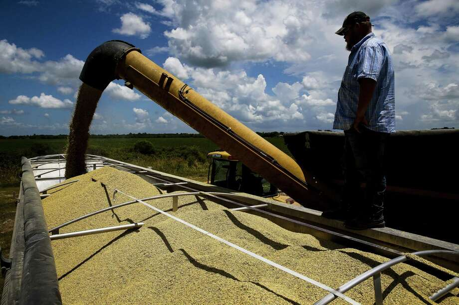 Farm hand Kevin Patterson stands on a truck full of harvested rice as he helps to load 55,000 pounds of the grain for transport at Ray Stoesser's farm in Raywood. Photo: Michael Ciaglo / Houston Chronicle / Michael Ciaglo