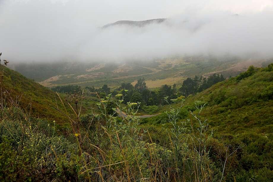 Fog bank in the Marin Headlands. Photo: Liz Hafalia, The Chronicle