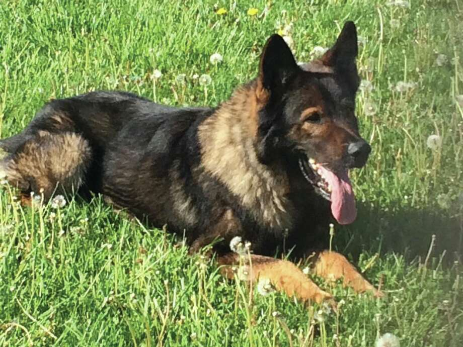 Rocky has retired after a 10-year career with the Madison County Sheriff's Department. Photo: For The Intelligencer