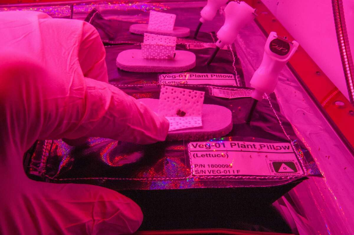 Image of a daily check on a Veg-01 experiment.