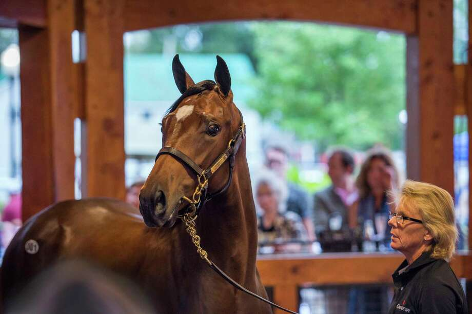 Hip #1, a filly by the sire Bernardini enters the ring as the first yearling to sell at the Fasig-Tipton Sales of select yearlings on the first of two nights Aug. 7, 2017 in Saratoga Springs, N.Y.  (Skip Dickstein/Times Union) Photo: SKIP DICKSTEIN