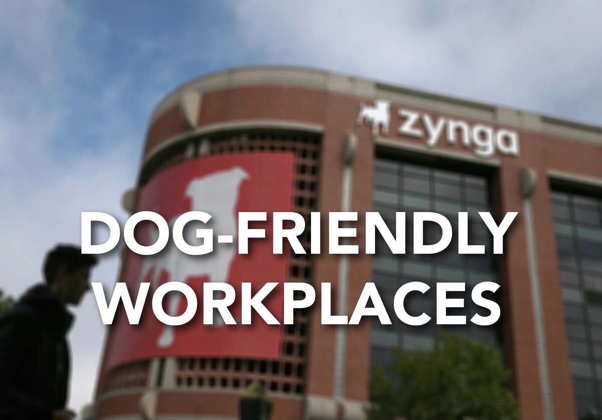 Which workplaces cater to dogs? Dogs and cats are welcome at these companies, according to Monster.com.
