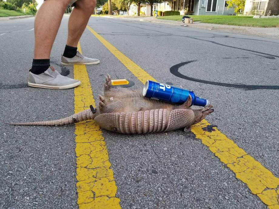 Bud Light has a long history of featuring animals in its ads though this is one they didn't plan on. See the following photos of other animals cooling down with some popsicles.  Photo: Yang293/Reddit