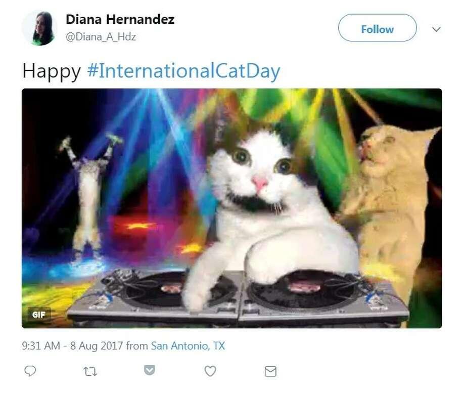 @Diana_A_Hdz: Happy #InternationalCatDay Photo: Screenshot