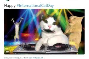 @Diana_A_Hdz: Happy #InternationalCatDay