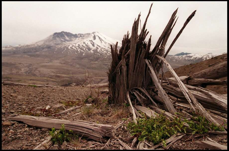 "First and foremost has to be the huge, powerful explosions that can devastate huge tracts of forest and kill people miles from the volcanic source. For instance, when Mount St. Helens erupted in 1980 it chalked up ""the largest debris avalanche on Earth in recorded history,"" a subsequent lateral blast devastated an area nearly 19 miles from west to east and more than 12.5 miles northward from the former summit, and blew 520 million tons of ash eastward across the United States, according to the USGS. The eruption killed 57 people.Photo: The site of Mount St. Helens twenty years after the great eruption of May 18th 1980. Photo: Dan Callister/Getty Images"