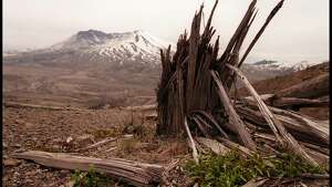 370215 01: Greenery makes a slow recovery, May, 29, 2000, on the site of Mt St Helens, twenty years on after the great eruption of May 18th 1980. (Photo by Dan Callister/Online USA)