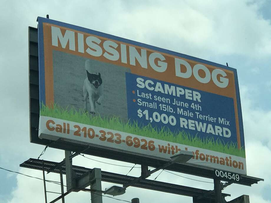 A billboard for an Olmos Park family's missing dog Scamper located at the intersection of McCoullough Avenue and East Ashby Place. Photo: Kelsey Bradshaw