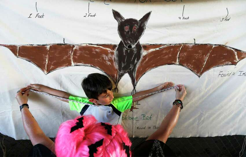 Max Dounson, 6, gets his arm span measure against the wing span against an illustration of a Giant Flying Fox Bat at the 5th annual Bat Loco Bash on Tuesday, Aug. 8, 2017. The San Antonio River Authority (SARA), Texas Parks and Wildlife Department (TPWD), and Bat Conservation International (BCI) hosted the event near Camden St. bridge on the Museum Reach segment of the San Antonio River Walk. The free, family-friendly event included a bat parade, educational booths, food trucks, live music and bat friends. The Bash is part of San Antonio's Kidcation Week which runs from August 5 through August 13. The public is invited to bring their chairs as SARA staff will lead the talk about the bat colony that currently resides under I-35 while sharing information related to the San Antonio River and the Museum Reach. Wildlife experts from TPWD and BCI will provide bat education and explain the important role bats have in the South Texas ecosystem.
