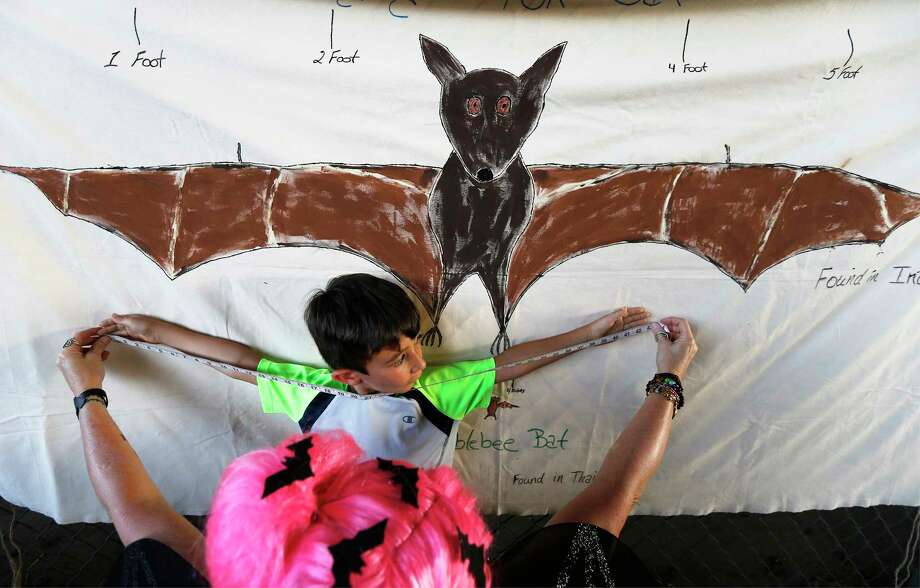 Max Dounson, 6, gets his arm span measure against the wing span against an illustration of a Giant Flying Fox Bat at the 5th annual Bat Loco Bash on Tuesday, Aug. 8, 2017. The San Antonio River Authority (SARA), Texas Parks and Wildlife Department (TPWD), and Bat Conservation International (BCI) hosted the event near Camden St. bridge on the Museum Reach segment of the San Antonio River Walk. The free, family-friendly event included a bat parade, educational booths, food trucks, live music and bat friends. The Bash is part of San Antonio's Kidcation Week which runs from August 5 through August 13. The public is invited to bring their chairs as SARA staff will lead the talk about the bat colony that currently resides under I-35 while sharing information related to the San Antonio River and the Museum Reach. Wildlife experts from TPWD and BCI will provide bat education and explain the important role bats have in the South Texas ecosystem. Photo: Kin Man Hui, San Antonio Express-News / ©2017 San Antonio Express-News