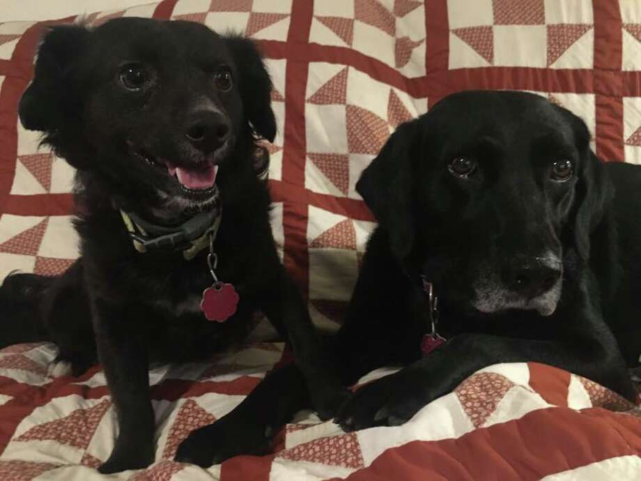Pirulo (left) and Lady (right) are missing after the car they were in was stolen in San Antonio. Photo: Provided By Maria Hartmann