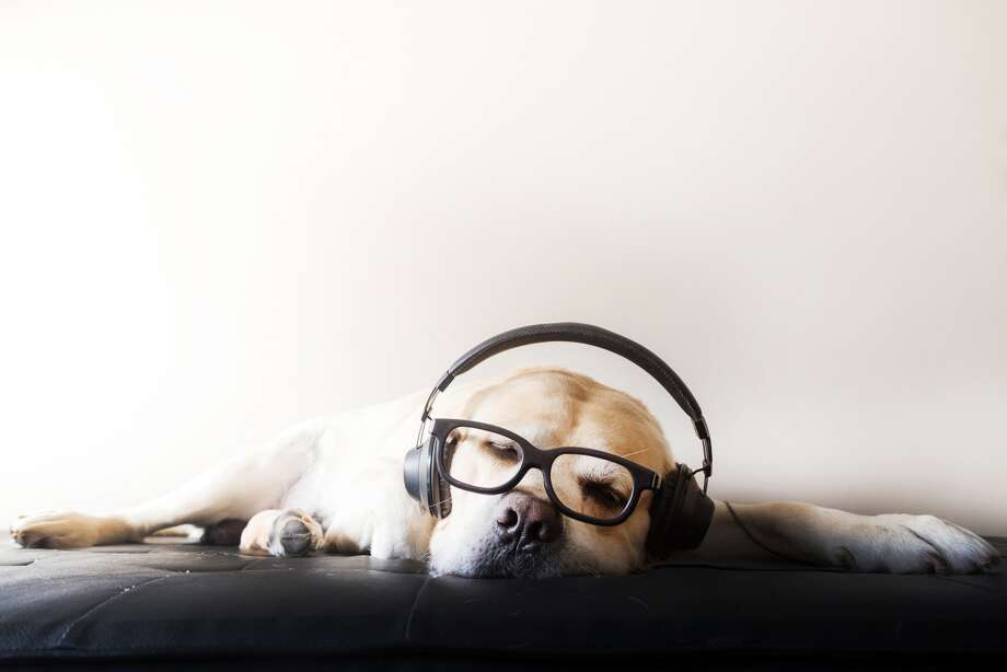 Audible now offers a selection of audiobooks for dogs. No headphones required.