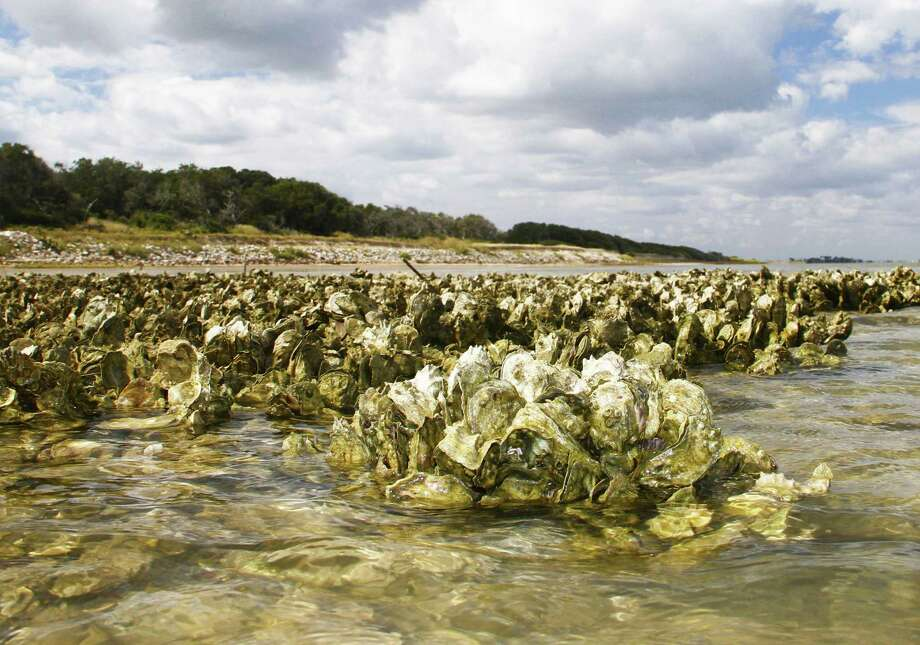 A package of proposals aimed at protecting and enhancing Texas' ecologically and economically valuable but increasingly beleaguered oyster reefs would prohibit harvest of oysters within 100 yards of shore and in seven minor bays. Photo: Shannon Tompkins