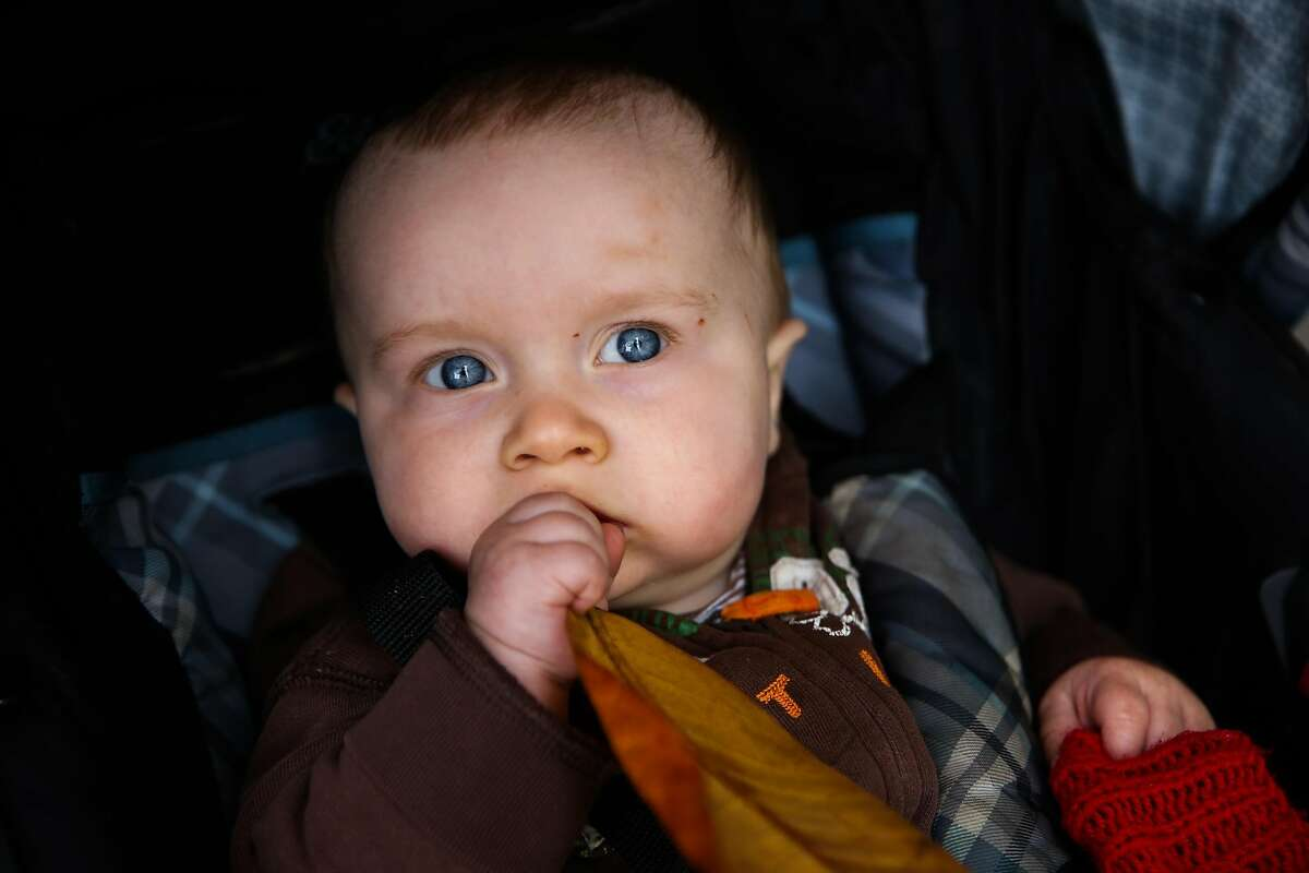 Donovan Wassell, 8-months, chews on a leaf while sitting in his stroller.