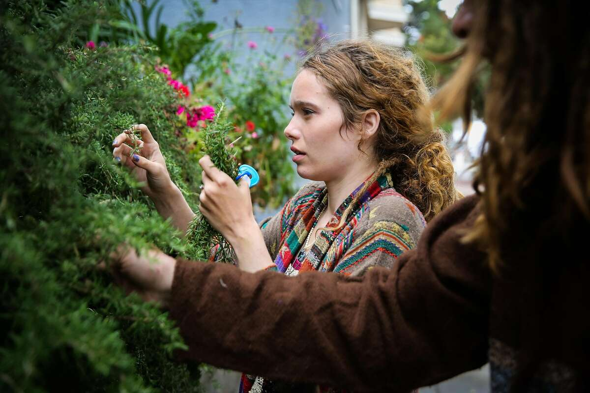 Parents Marielle Lowes (left), 24, and Paul Wassell (right) pick rosemary from a bush as they make their way to a friend's house in San Francisco.