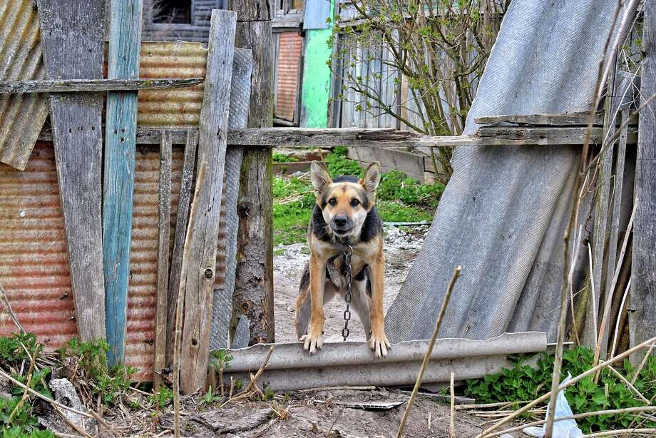 Our cruelty laws and local ordinances protect animals from abuse and severe neglect as well as require pet owners to provide basic standards of care, including proper shelter and access to clean water and food. Photo: Elena Levchenko / EyeEm /Getty Images / This content is subject to copyright.