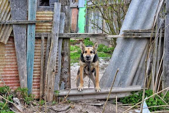 Our cruelty laws and local ordinances protect animals from abuse and severe neglect as well as require pet owners to provide basic standards of care, including proper shelter and access to clean water and food.