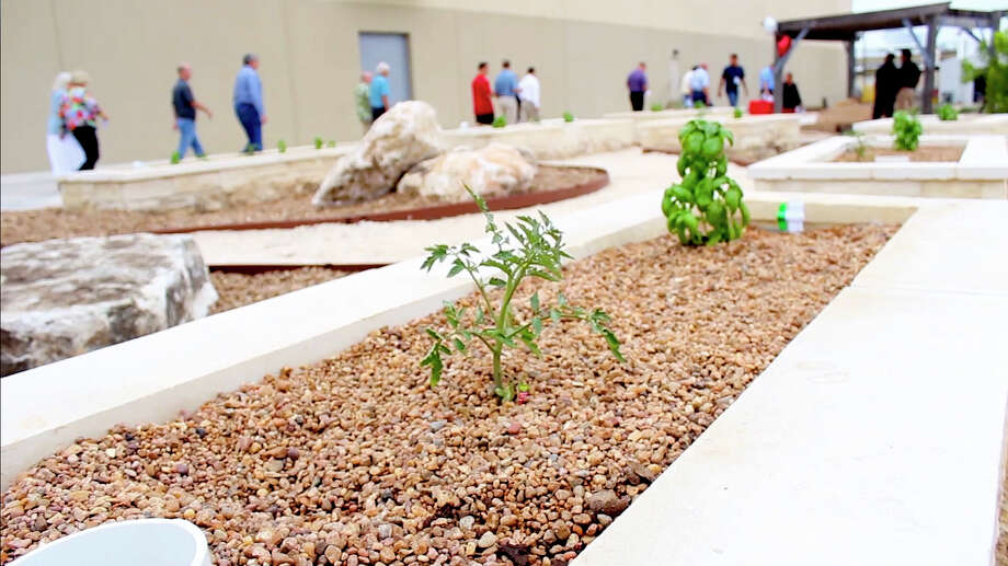 The aquaponics system at the San Antonio Food Bank features eight raised grow beds where beneficial bacteria and microorganism live.