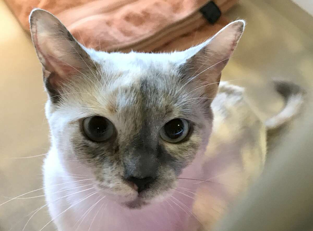 The Williamson County Regional Animal Shelter in Georgetown, Texas said it may have to euthanize 100 cats in an Aug. 10, 2017 Facebook post due to lack of space.
