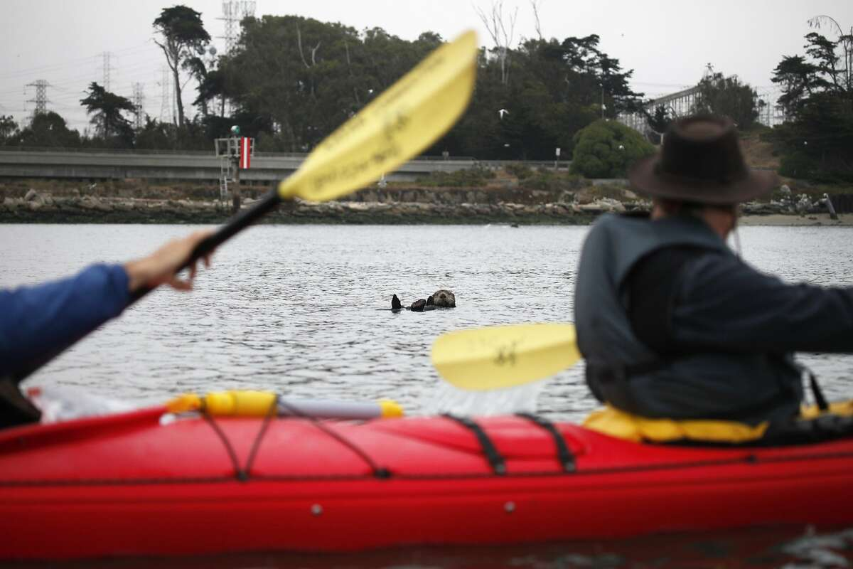 Elkhorn Sloughin Moss Landing, Calif. is Field's favorite place to view sea otters.