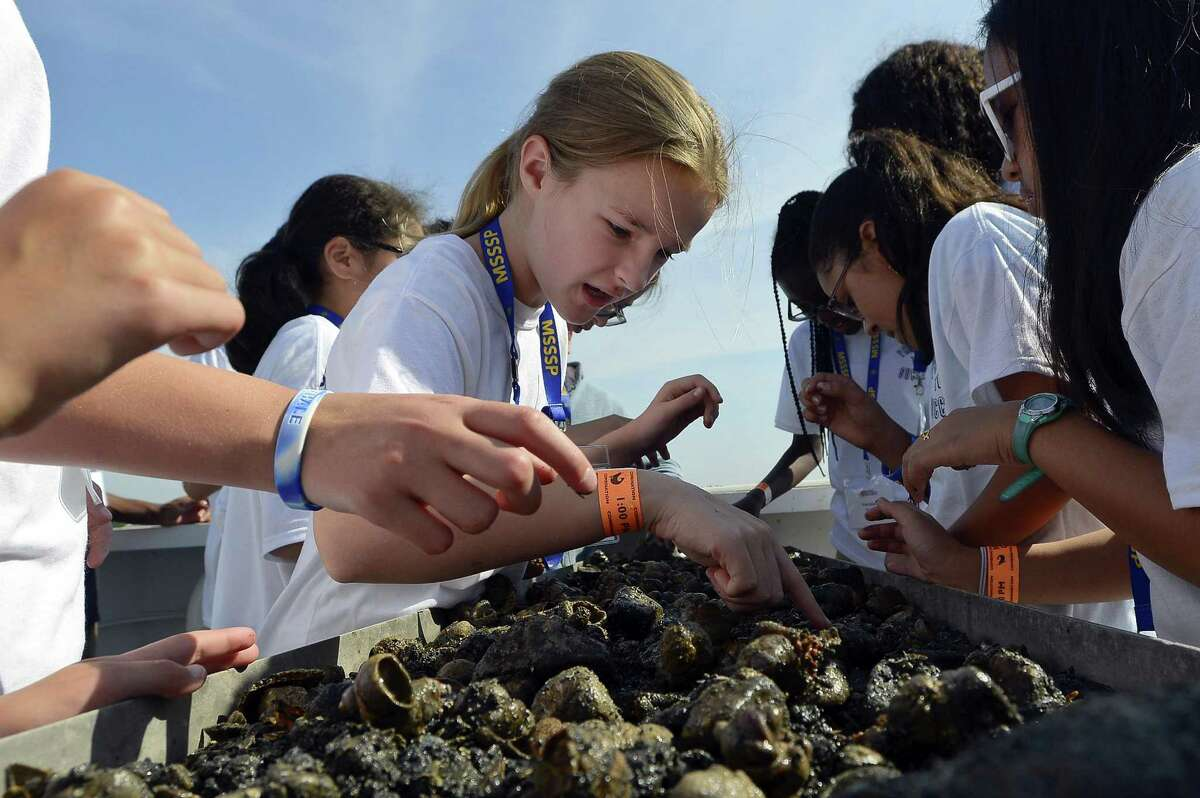 Emma Connolly and other students from Rippowam Middle School, sift through the contents of a net. The students part of a summer scholars program taking part in a science education cruise on the Long Island Sound aboard the aquariums 64-foot research vessel R/V Spirit of the Sound on Friday, August 11, 2017.