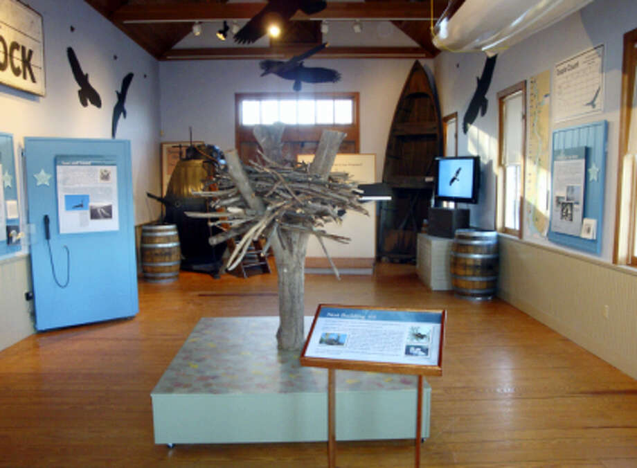 Contributed photo The Connecticut River Museum's eagle exhibit opens Feb. 4, and will offer numerous activities for visitors in partnership with RiverQuest's winter river cruises. Photo: Digital First Media