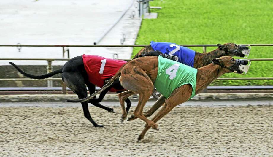 Three greyhounds race down the track to the finish line. Photo: The Associated Press File Photo  / AP