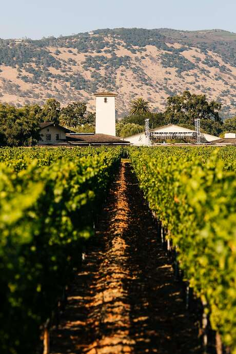 The To Kalon Vineyard in Oakville with Robert Mondavi Winery in the background. Photo: Mason Trinca, Special To The Chronicle