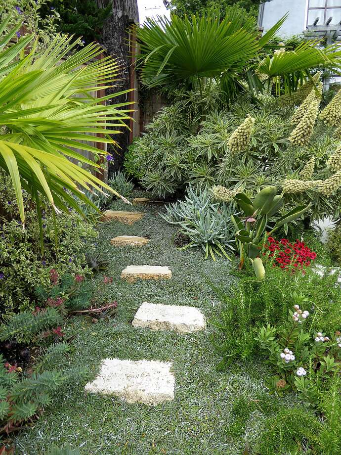 A path of pavers on dymondia, a dense and durable ground cover. Photo: Annie's Annuals & Perennials