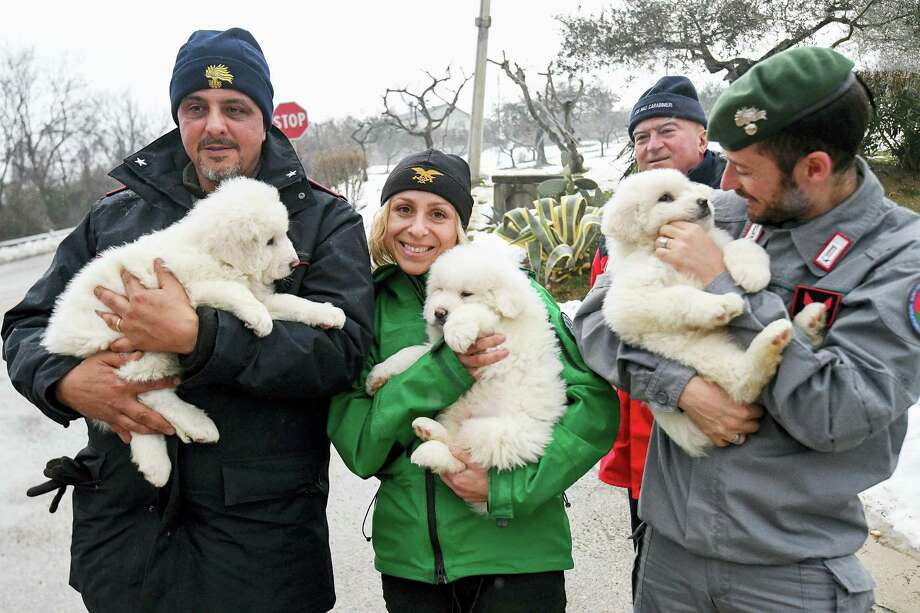 Rescuers hold three puppies that were found alive in the rubble of the avalanche-hit Hotel Rigopiano, near Farindola, central Italy on Jan. 22, 2017. Emergency crews digging into an avalanche-slammed hotel were cheered Monday by the discovery of three puppies who had survived for days under tons of snow, giving them new hope for the 23 people still missing in the disaster. Photo: Alessandro Di Meo/ANSA Via AP  / ANSA