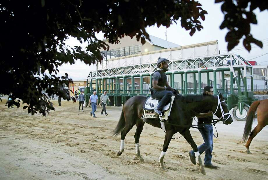 Kentucky Derby winner Always Dreaming, ridden by exercise rider Nick Bush, walks past the starting gates at Pimlico Race Course in Baltimore. Photo: The Associated Press   / Copyright 2017 The Associated Press. All rights reserved.