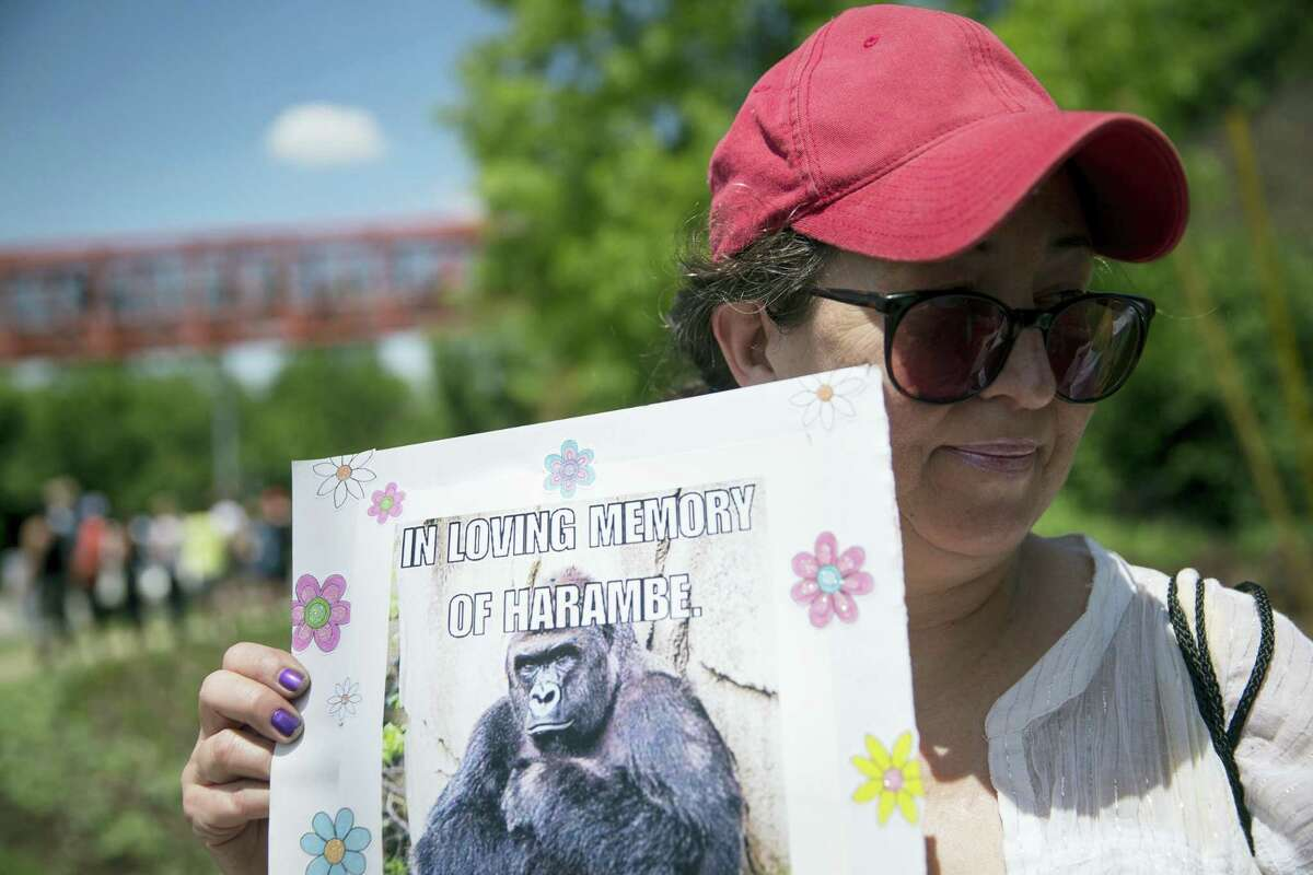 In this May 30, 2016, file photo, Alesia Buttrey, of Cincinnati, holds a sign with a picture of the gorilla Harambe during a vigil in his honor outside the Cincinnati Zoo & Botanical Garden, in Cincinnati. A Cheeto that bears a resemblence to the slain gorilla sold for nearly $100,000 on eBay Tuesday, Feb. 7, 2017.